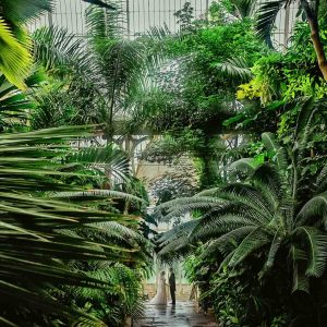 сватбена снимка в зелена ботаническа градина